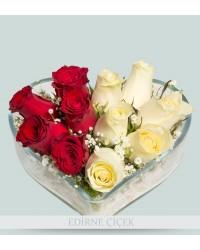 Aşık ve Zarif Kırmızı-Beyaz Güller