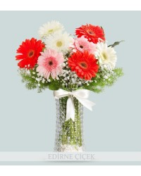 3 Renk Gerbera Çiçekleri